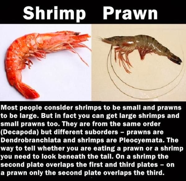 Differences between Shrimp and Prawn