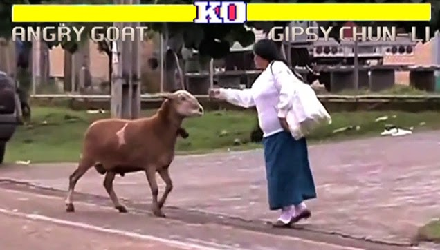The goat attacked the poor lady.