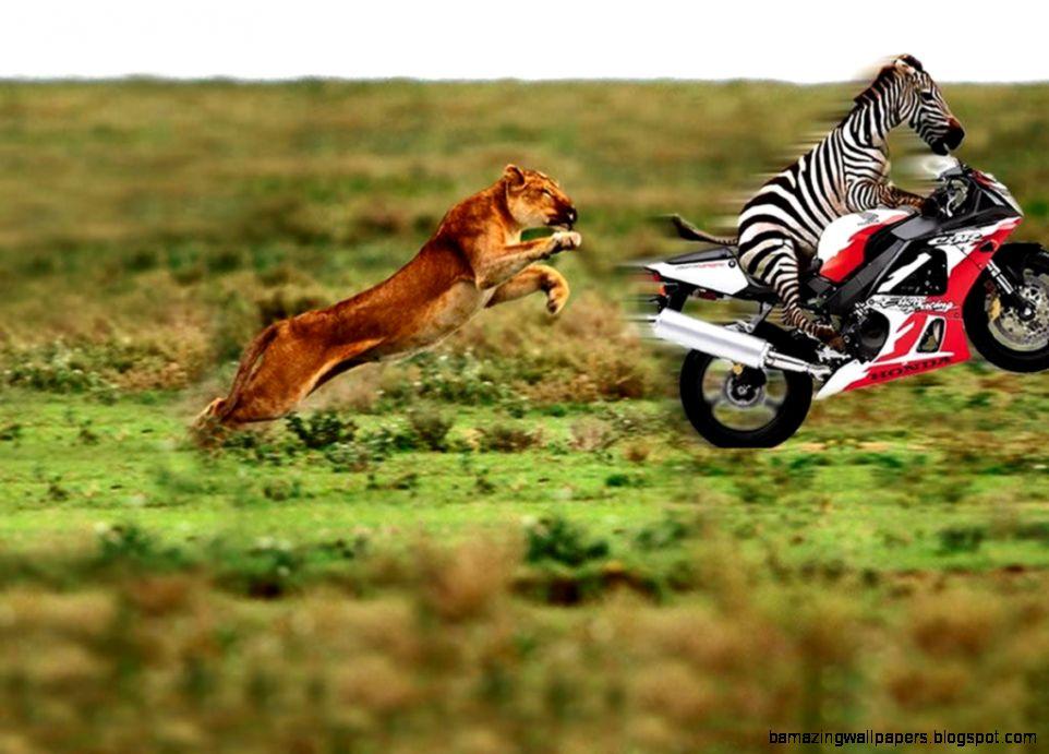 Animal Funny HD Wallpapers2