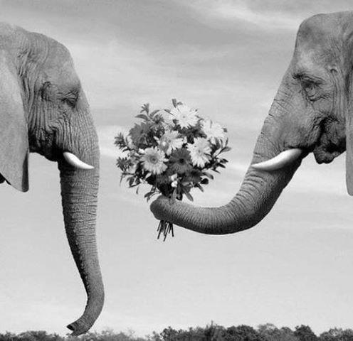 Романтичные анекдоты