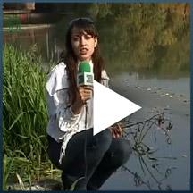 Teste para saber se o rio é poluído ou não