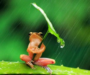 Frog held on to a leaf for shelter