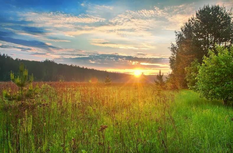 Сила исцеления природы для современного человека
