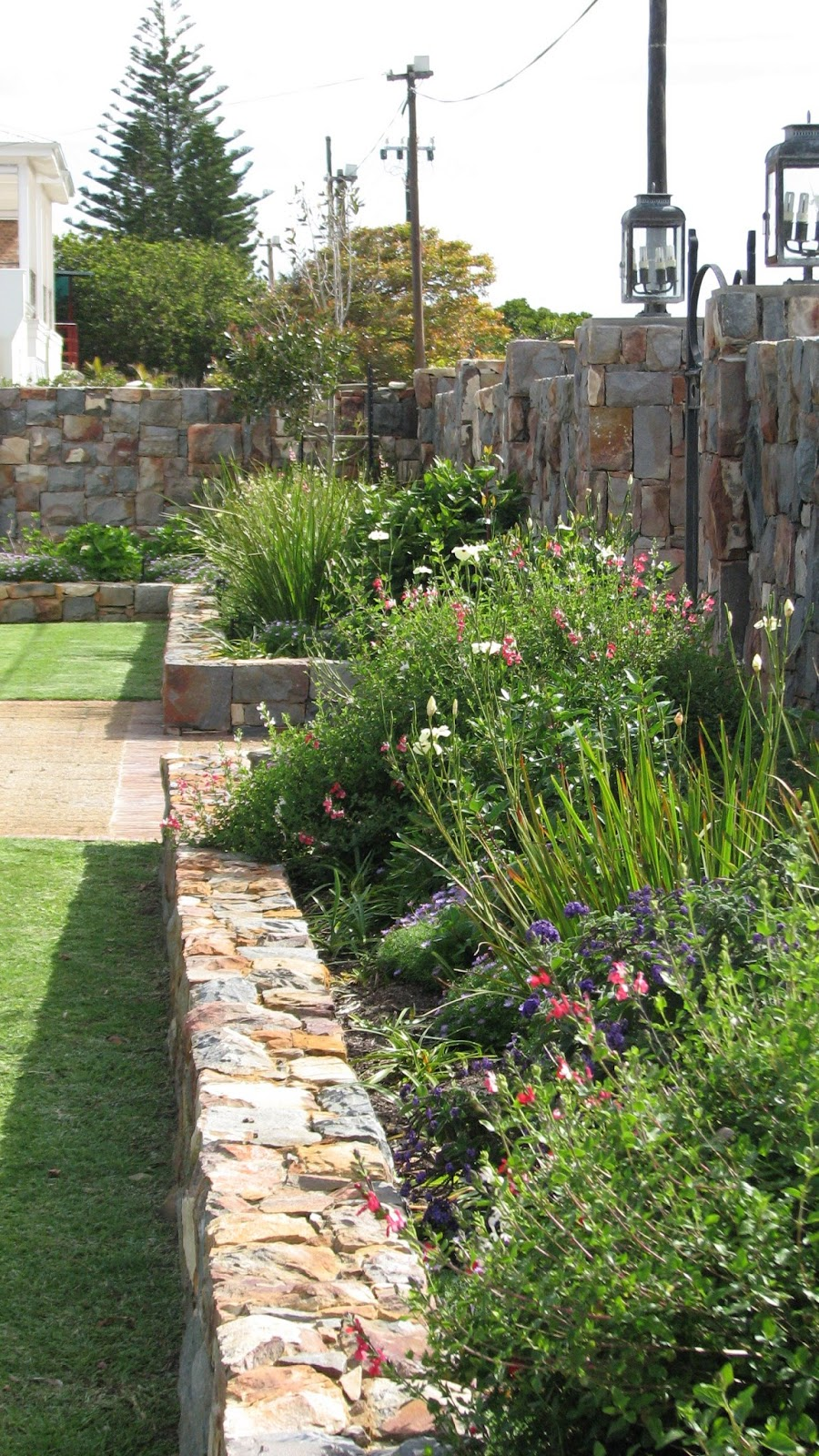 Fynbos gardens hermanus for Garden ideas south africa