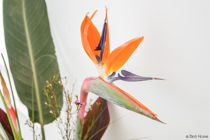 Strelitzia bloem - Bloomon bloemabonnementen - © Binti Home