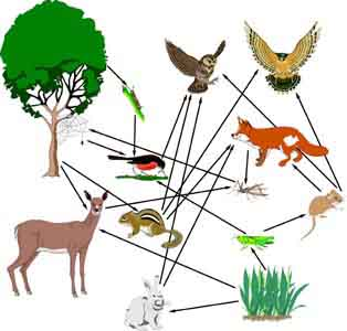 network of many... Quaternary Consumer