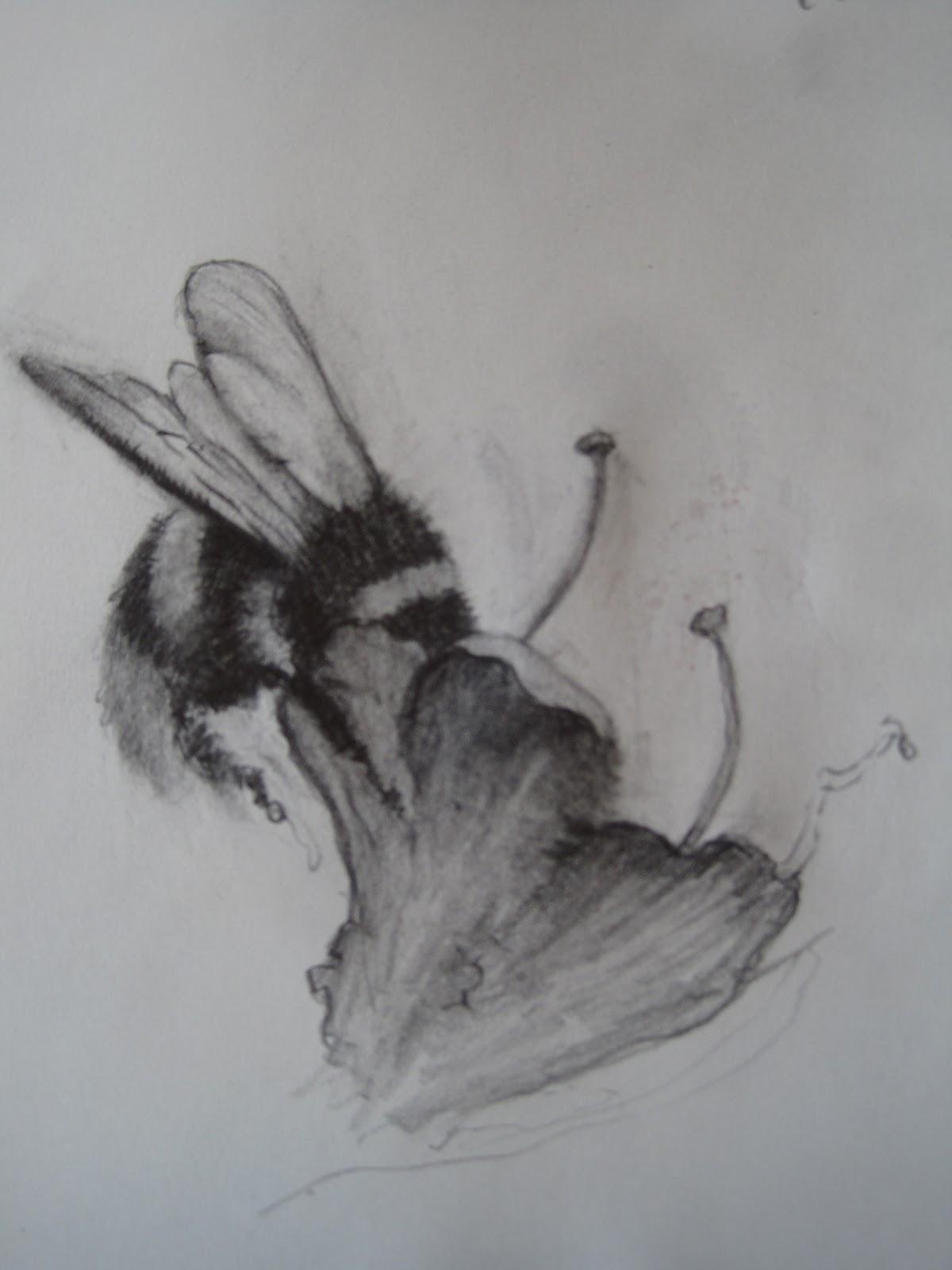Vermeer And Bridget Riley Drypoint Progress Bumble Bee Drawings