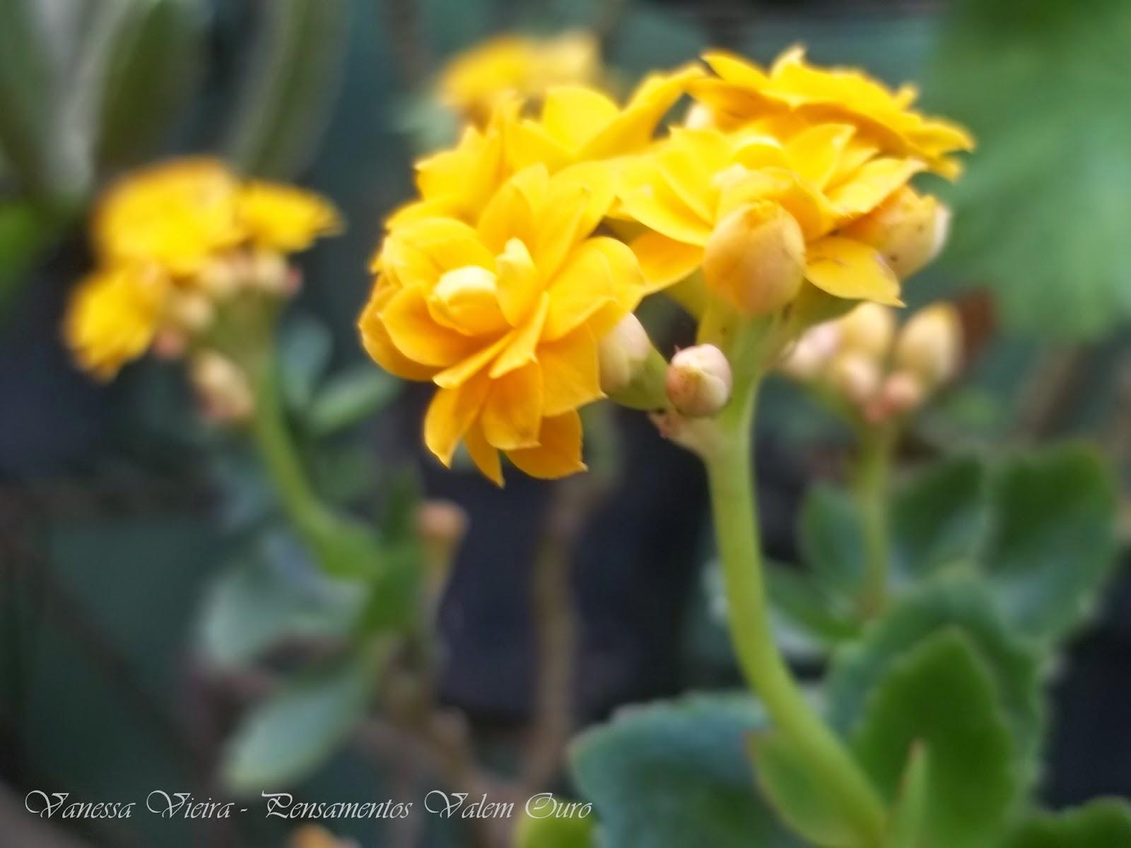 Fotografia, na nossa lente, primavera, Vanessa Vieira, Pensamentos Valem mais que Ouro