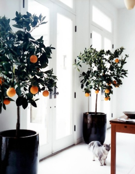 Is There Anything More Memorable Than Coming Home To Oranges That Are Sweet  And Bright? Fruit Trees Patio