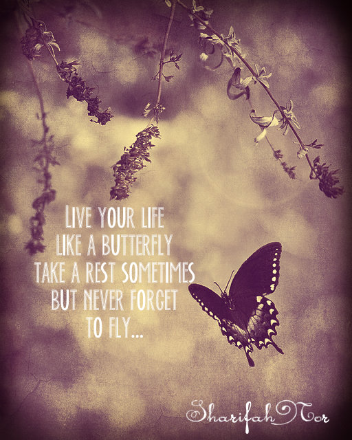 life is like a butterfly quotes quotesgram