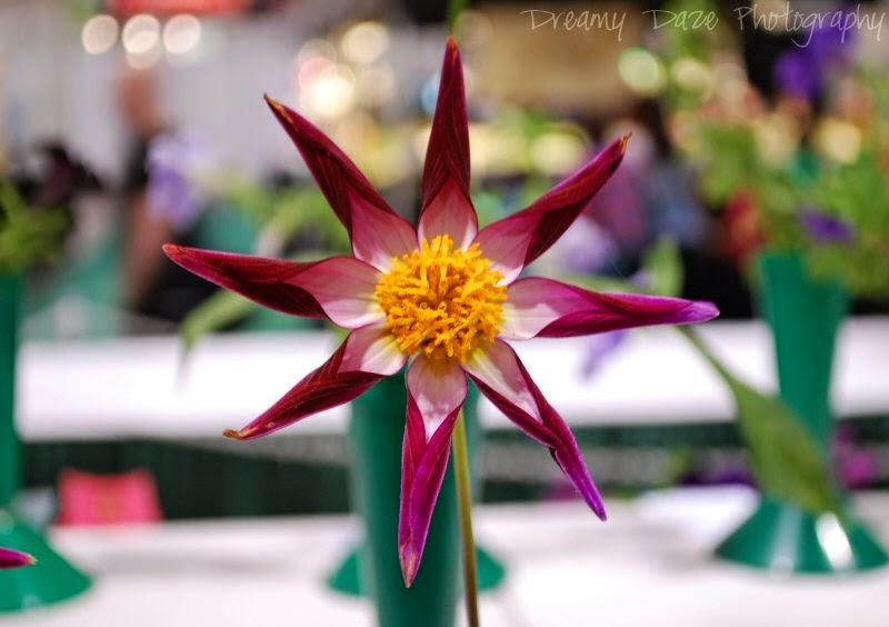 2014 Toronto CNE Garden and Flower Show
