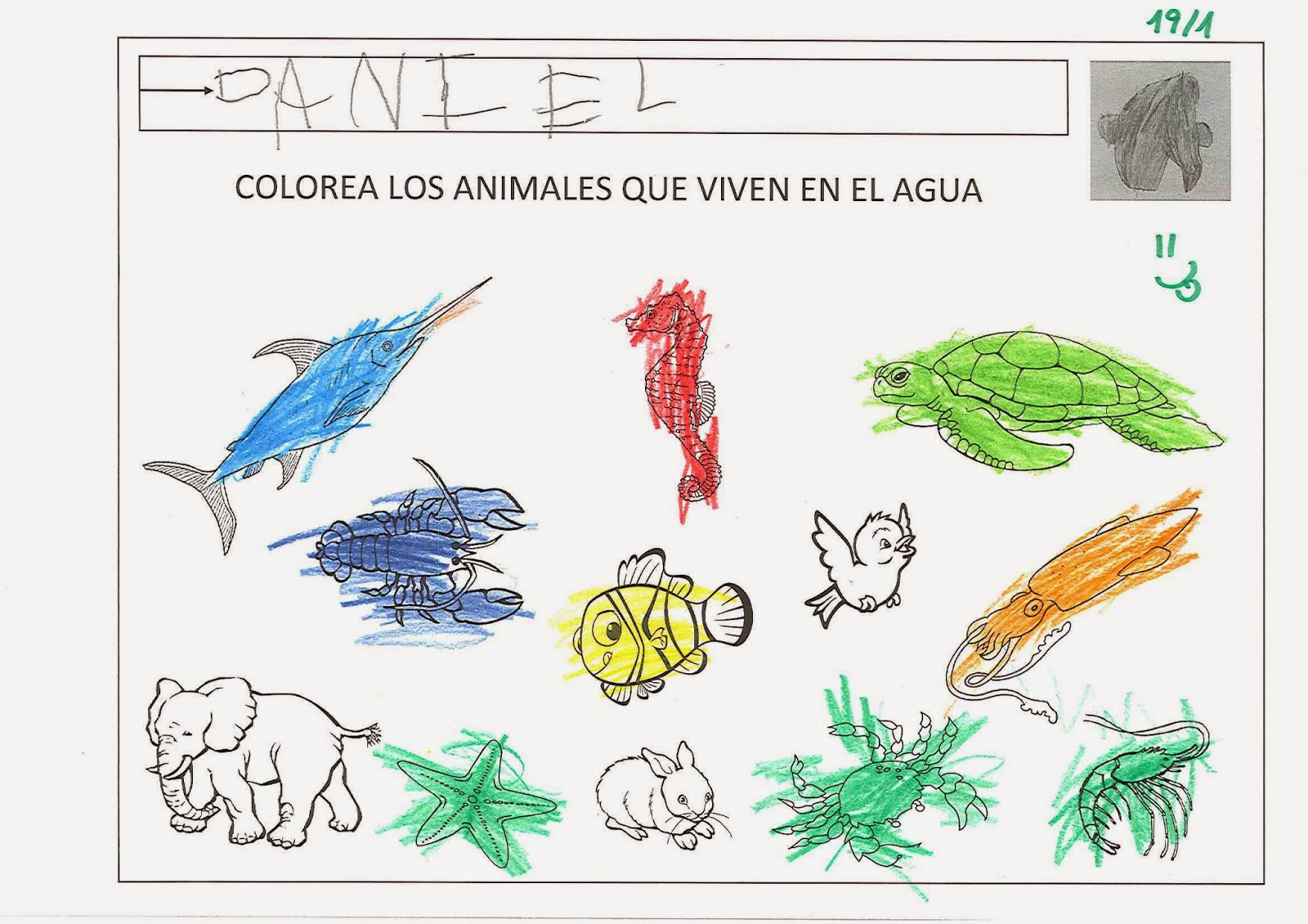 Nutria o Perro de Agua (Pteronura brasiliensis)
