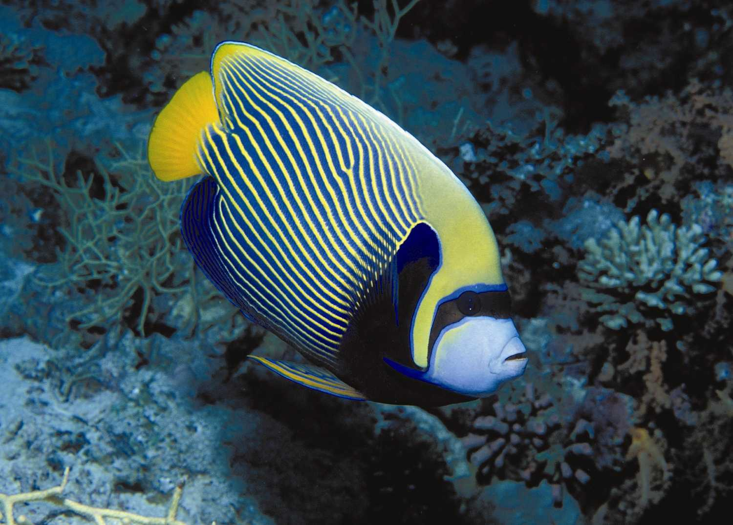 tropic fish - photo #22