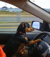 enjoy a drive