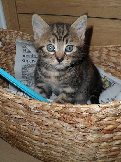 Curious kitten playing