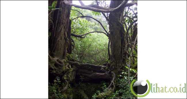 Pohon pintu gerbang