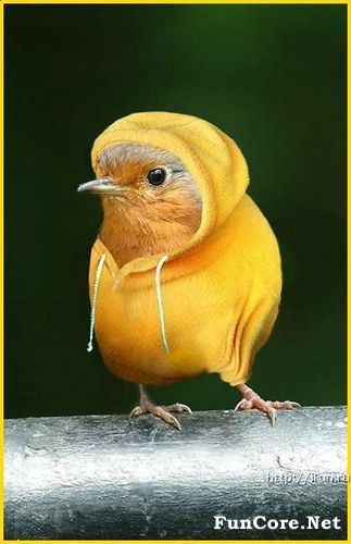 Funny picture clip funny bird pictures a world of bird news awaits - Funny bird pics ...