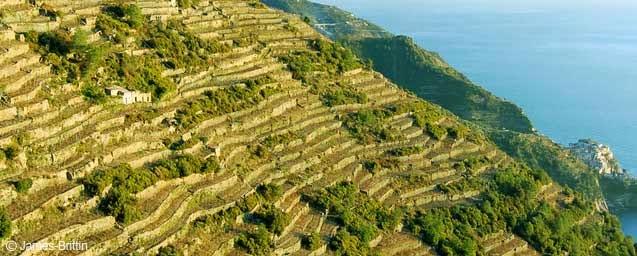 Best Terrazzamenti Liguri Images - Idee Arredamento Casa - baoliao.us