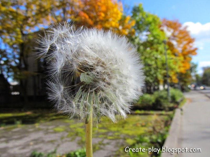 одуванчик осенью