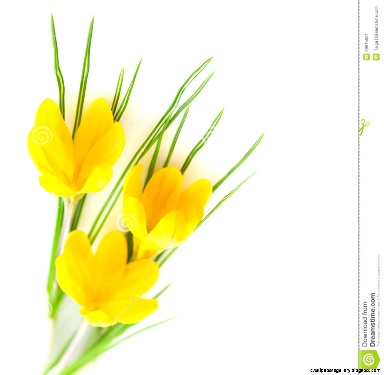 Yellow Spring Flowers Background Wallpapers Gallery