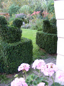buxus- kippies...