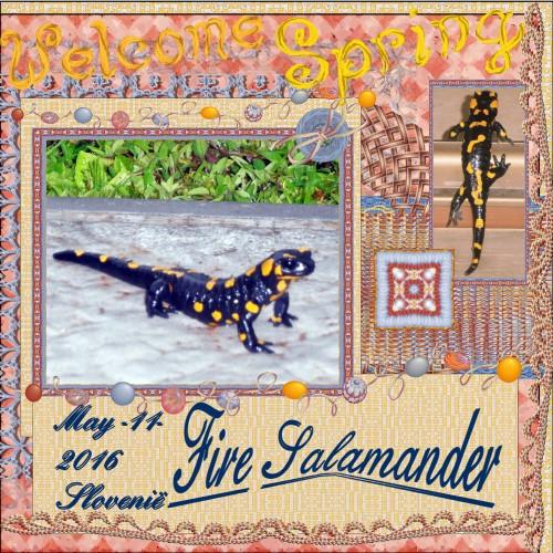 May 2016- Fire Salamander
