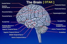 10 Fenomena Aneh Dalam Otak Manusia