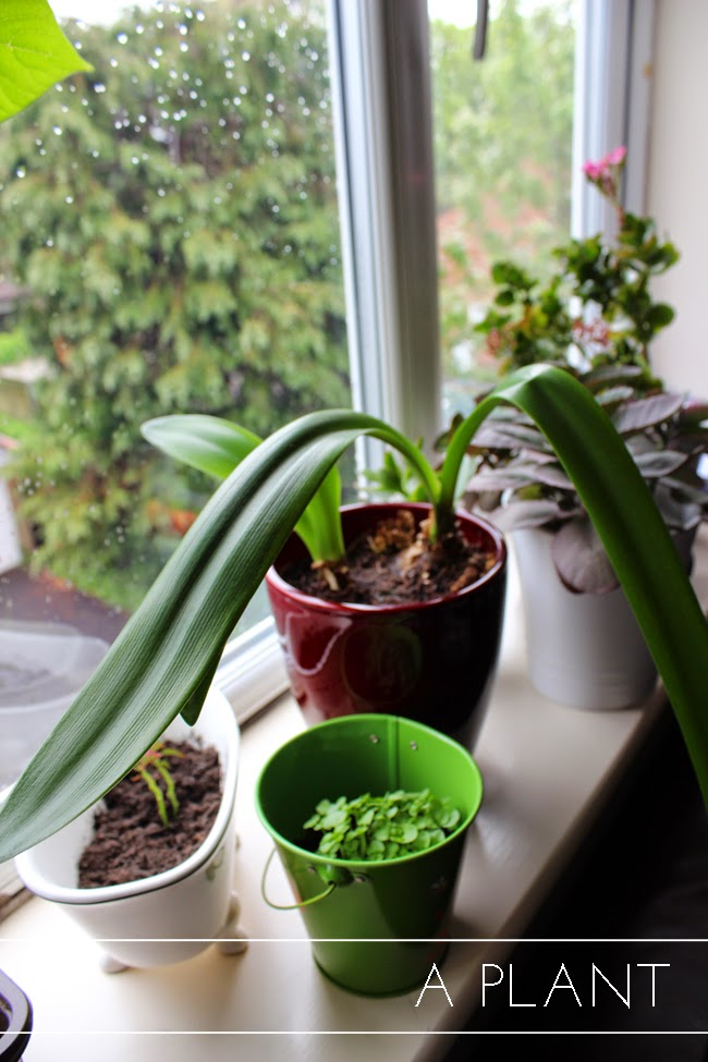 green-plant-happy-home-todaymywayblog