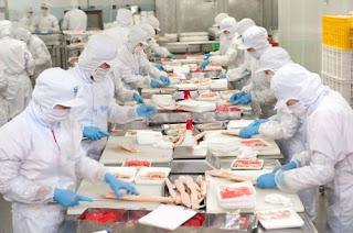 Tuyển gấp lao động chế biến thủy sản tại Nhật Bản