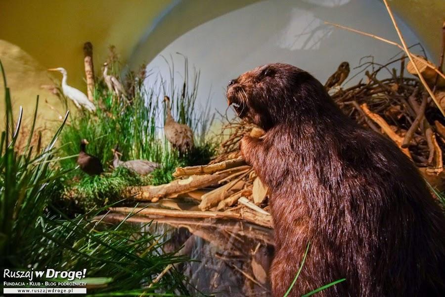 Wystawa przyrodnicza na Zamku w Kwidzynie