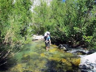Wading across the creek.