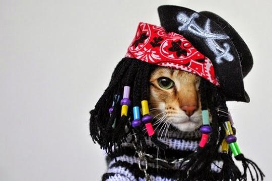 ridiculous looking cat