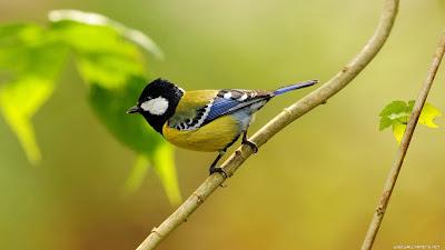 Top-10-Birds-Wallpapers-2012