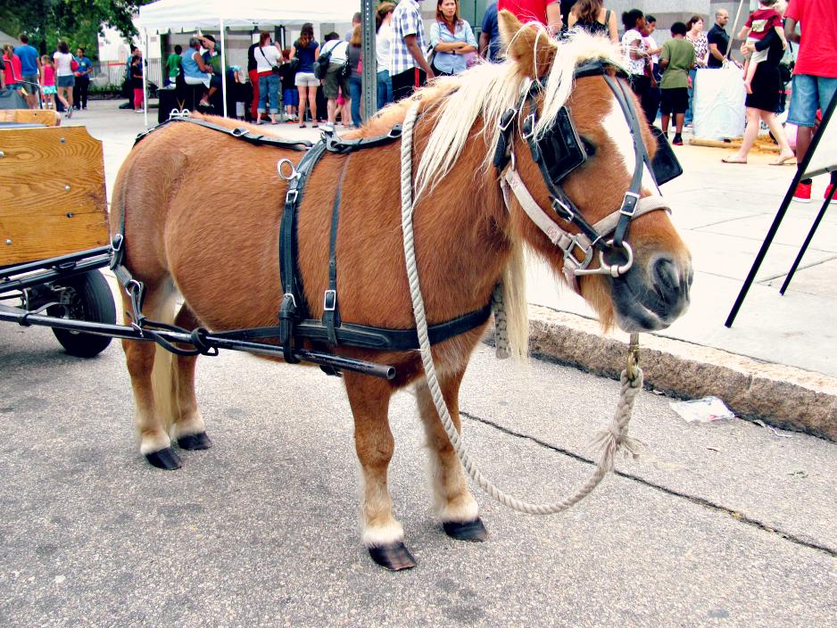 bugfest-2013-miniature-horse-raleigh-nc