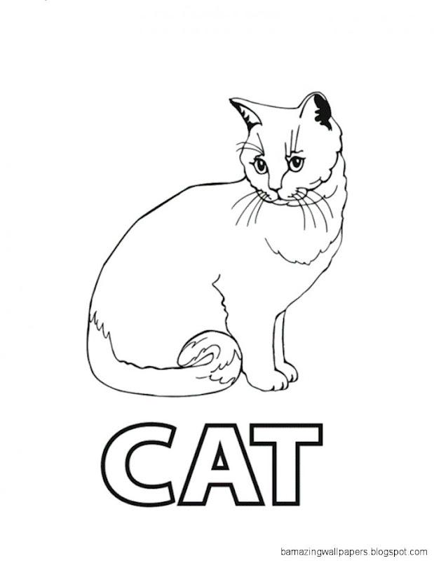 Cat Color Page