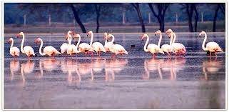 Bharatour National Park Bharatpur India