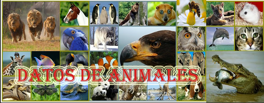 Datos de Animales