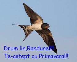 Drum lin,Randunel!!!