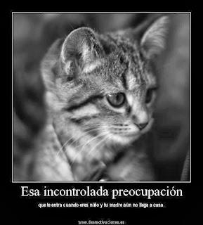 Esa incontrolada preocupacion (gato)