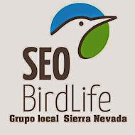 SEO Sierra Nevada.