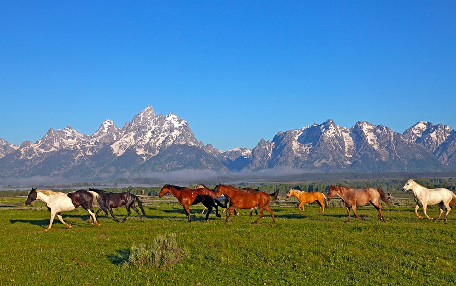 Take a timeshare vacation to the wild west for the jackson for Stazione di jackson hole cabin