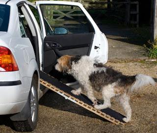 cães rampa para veículos