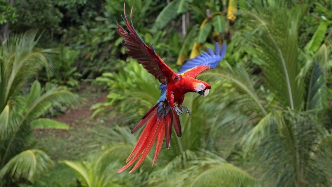 Parrot Flying HD Wallpaper
