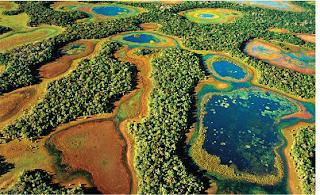 Dia do Pantanal