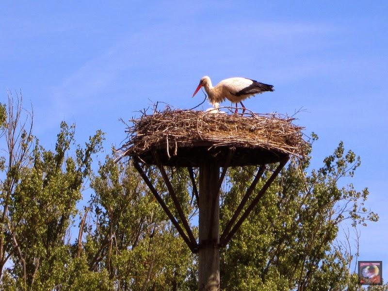 Cigüeña en el Humedal de Salburua en Vitoria-Gasteiz (Araba)