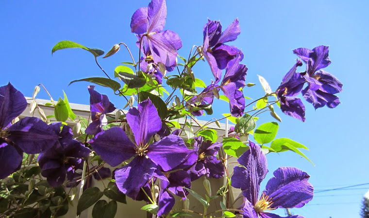 blue flowers up in the sky