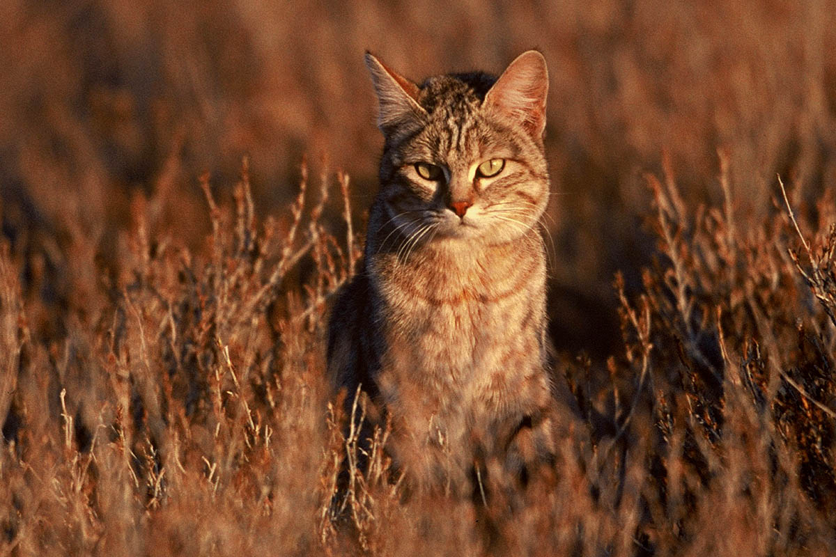 Amazing african animals the african small cats beautiful dangerous