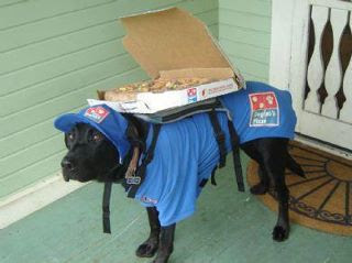 Dog Pizza Delivery