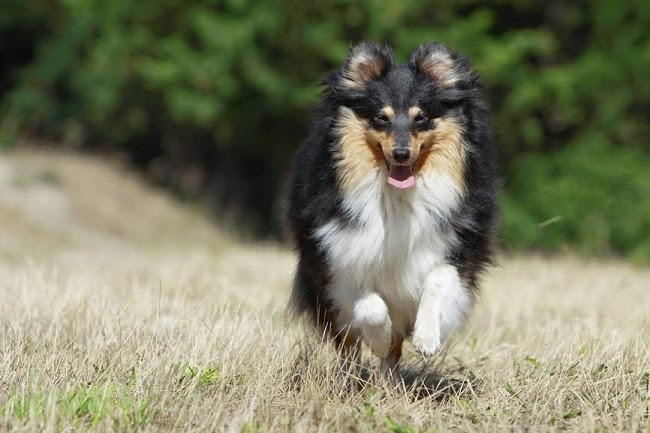 Obility, czyli sport dla psa i jego właściciela