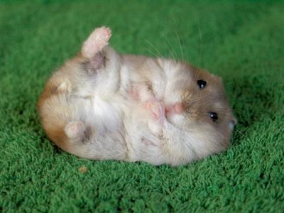 cute baby animal pictures 2 amazing creatures